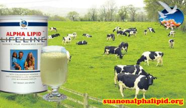 Sữa non alpha lipid Lifeline được nhập khẩu hoàn toàn từ New Zealand